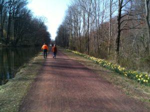 Daffodils Black Rock Road on Canal