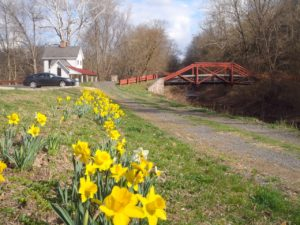 Daffodils on Canal 1